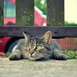 Comment éloigner les chats - les remèdes les plus efficaces