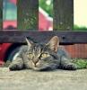 odeur que les chats n aiment pas un chat qui pénètre dans le jardin