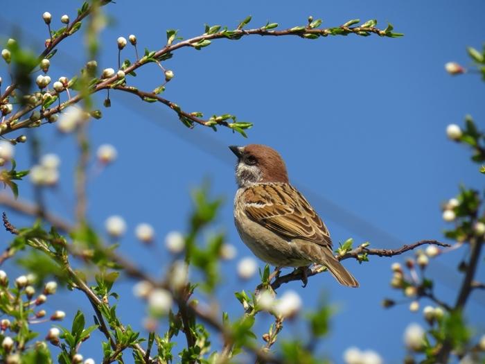 oiseaux arbres remède naturels conseils utiles pour combattre les parasites dans le jardin