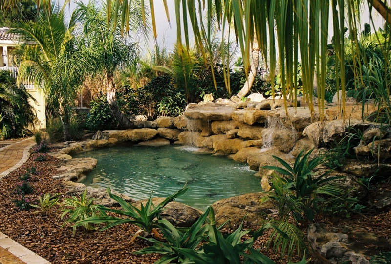palmier autour piscine palmes exotiques autour de la piscine