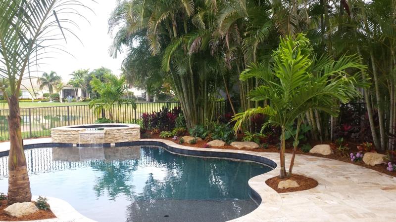 palmier autour piscine un palmier près de la piscine