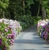 parterre de fleur moderne allée bordée d arbustes fleuris et d arbres