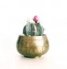photo d un cactus fleuri fleur rose pot d ore