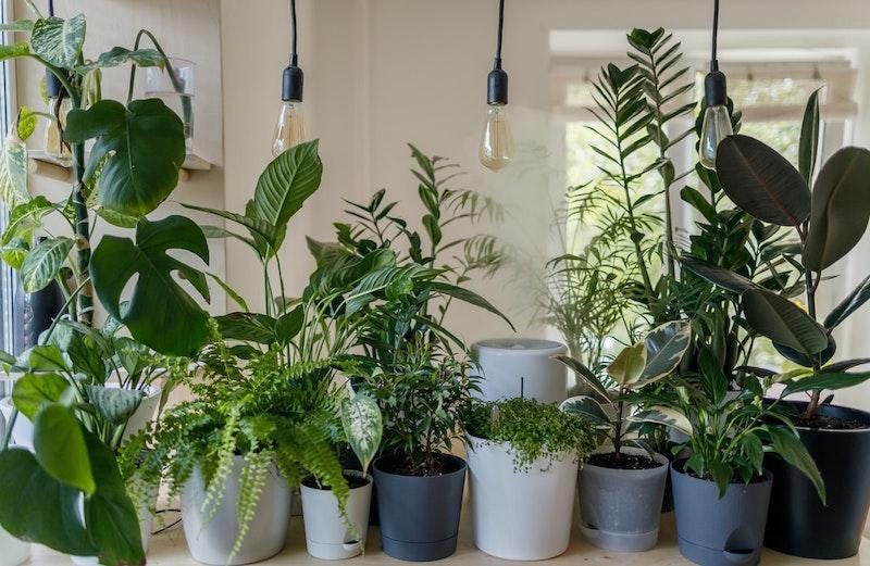 plante verte d interieur deco vegetale