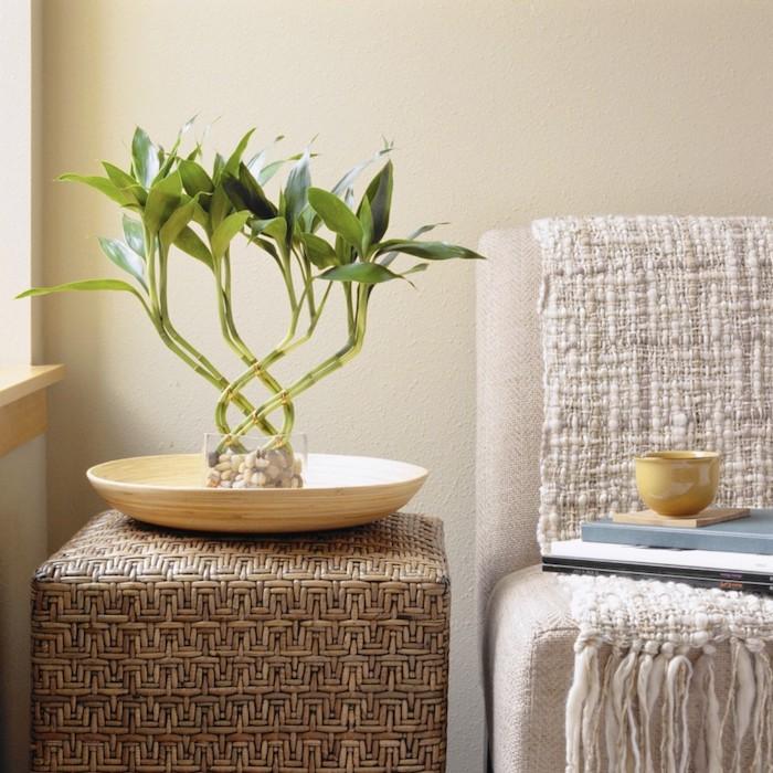 planter bambou en pot plante décorative pour la chambre à poser sur une table