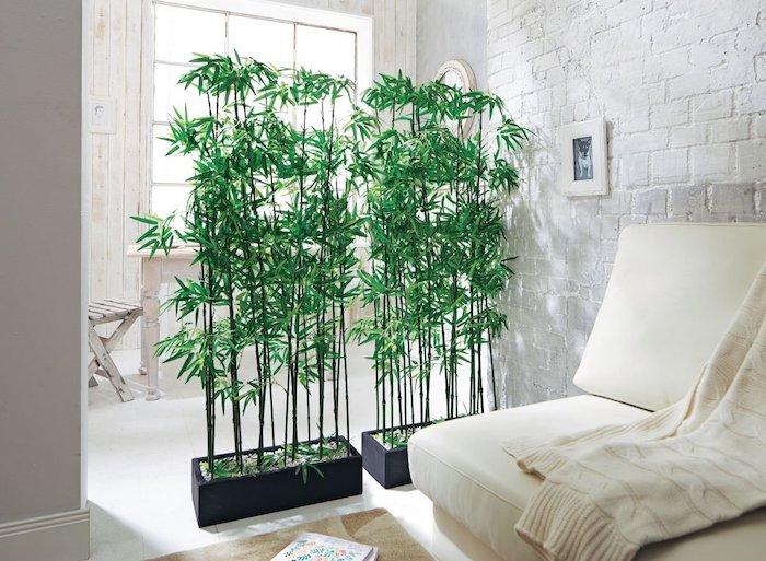 planter des bambous en bac noir en contarse avec la pièce blanche