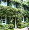 planter jasmin grimpant sur le mur d'une grande maison