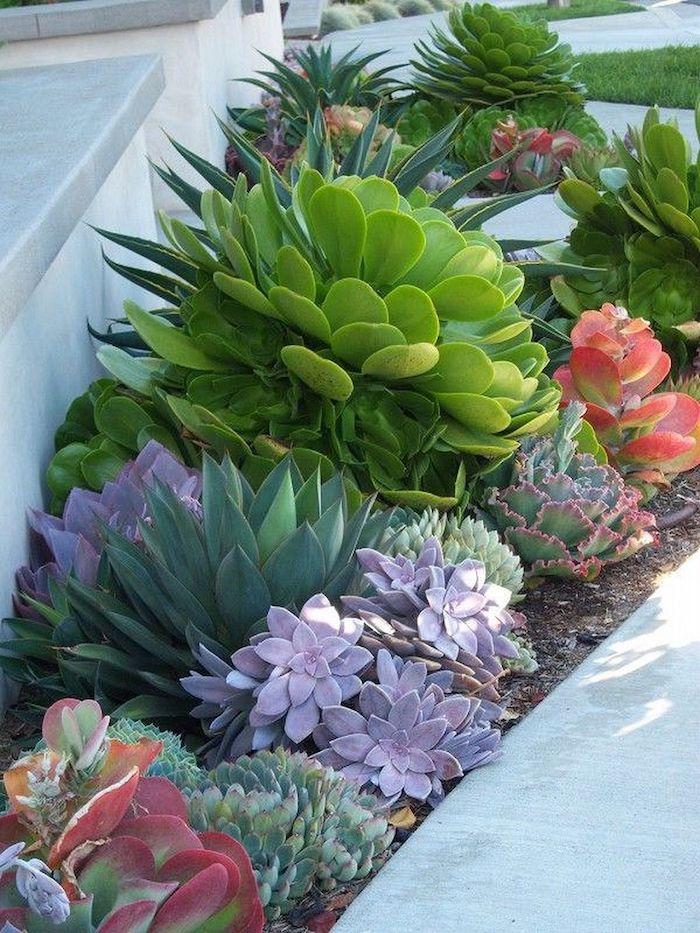 plantes grasses extérieur qui ne gèlent pas en différentes sortes et formes