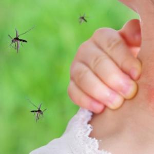 Conseils et astuces comment soigner une piqûre de moustique