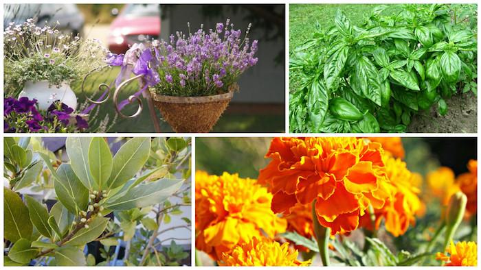 que faire contre les mouches des plantes et fleurs qui repoussent les mouches