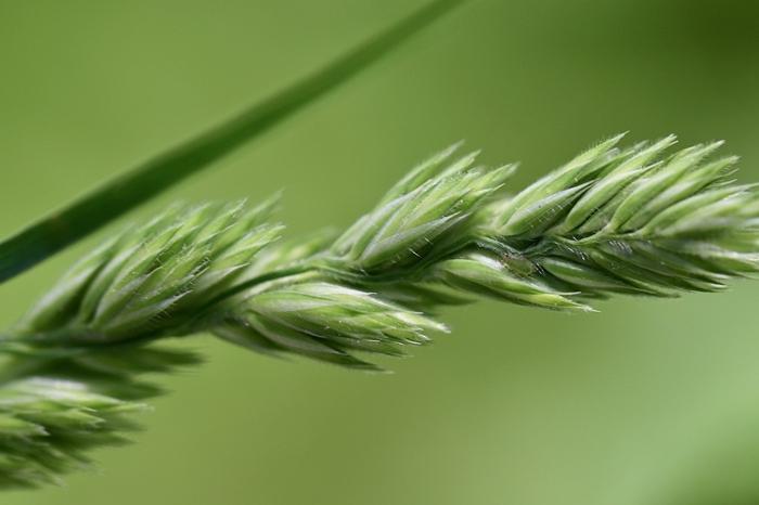 que faire contre pucerons plante verte pucerons lutte parasite dans le jardin