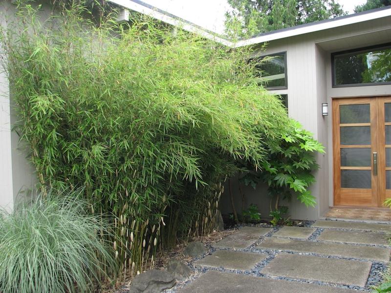 que planter le long d un mur d une maison plante bambou haut