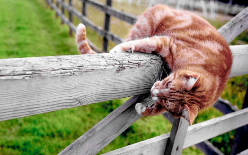 quelle est l odeur que les chats détestent un chat dépasse une clôture