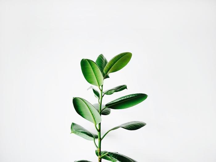 répulsif contre pucerons remèdes maison contre les parasites plante verte