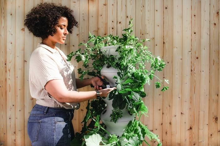 répulsif naturel fourmis et parasites de jardin lutte contre les pucerons femme jardinage astuces