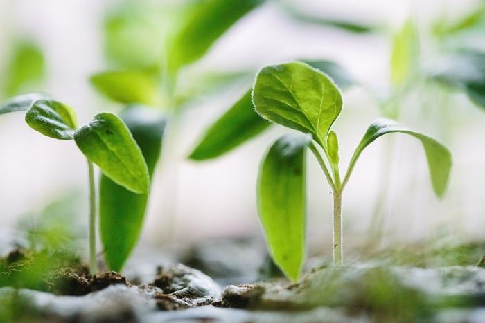 remede contre les pucerons plantes utiles pour combattre les insectes meilleurs trucs et conseils jardin