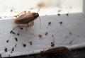Comment se débarrasser des cafards : méthodes et produits naturels
