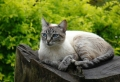 Comment éloigner les chats – les remèdes les plus efficaces