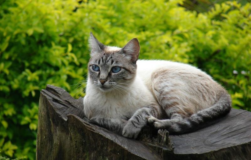 repulsif naturel chat un chat dans le jardin