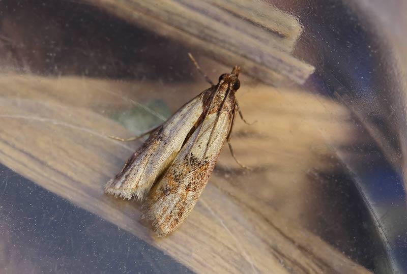 se débarasser des mites la lutte contre les insectes