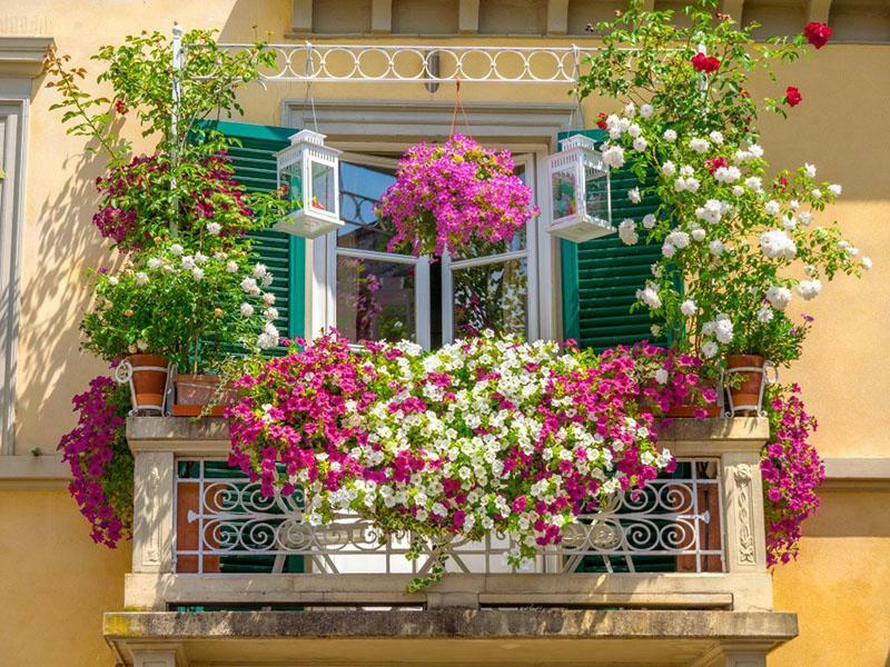 se proteger d un vis a vis plongeant une terrasse décorée de fleurs