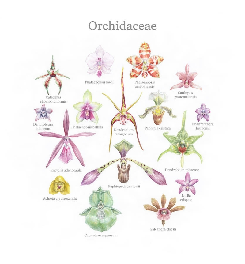 selection of orchid species megan kunst