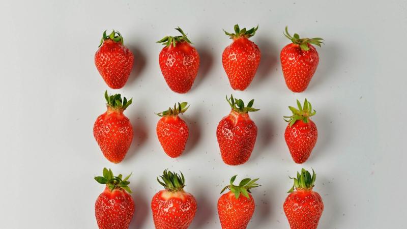 sorbet fraise fraises sur une plaque pour faire un sorbet