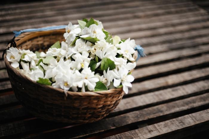 support pour jasmin étoilé fleurs blanches du jasmin