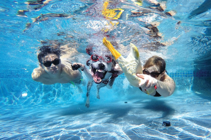 tour de piscine une famille et son chien qui plongent dans la piscine