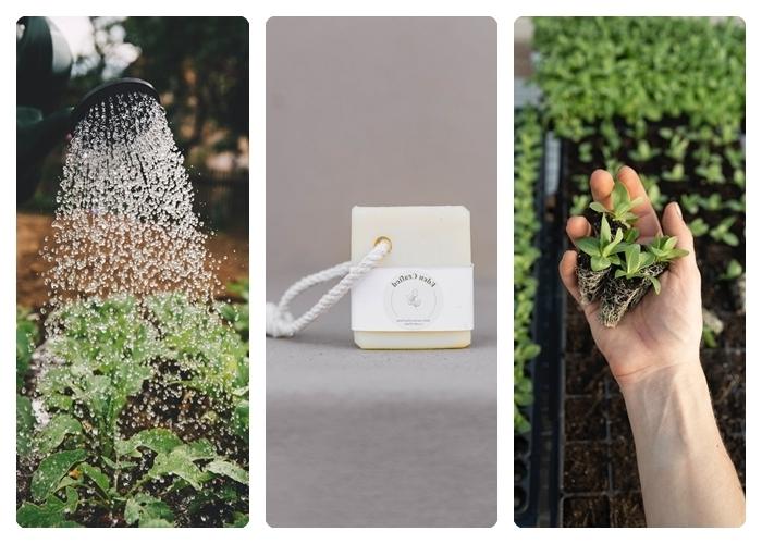 traitement anti puceron meilleurs remèdes maison pour combattre les insectes savon eau savonneuse