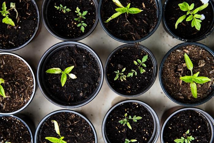 traitement puceron naturels plantes utiles pour éloigner les parasites de jardin