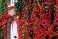 10 idées «vertes» pour habiller un mur extérieur avec des plantes