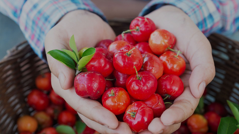 aliment riche en vitamine c quelques acérolas rouges