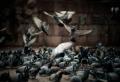 Comment faire fuir les pigeons – nous avons trouvé la solution !