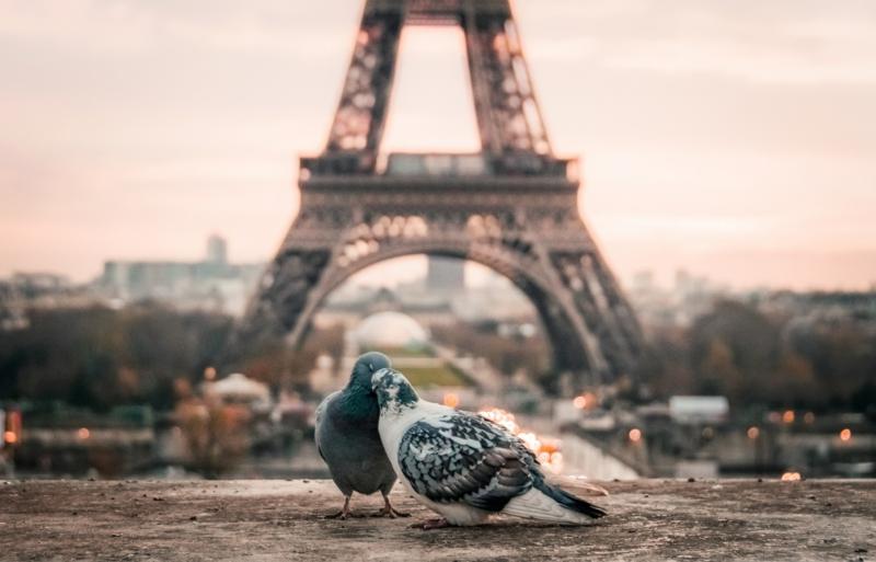 comment faire fuir les pigeons deux pigeons devant la tour eiffel