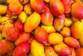 Planter un noyau de mangue : les secrets pour faire pousser l'arbre tropical chez soi