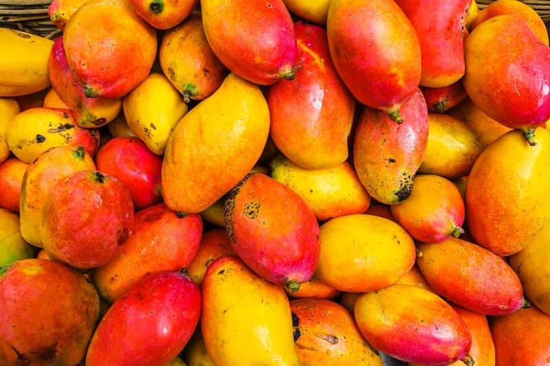 comment faire pousser un noyau de mangue