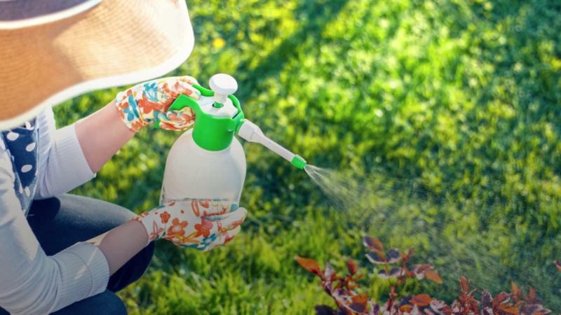 comment utiliser le sel d epsom dans le jardin