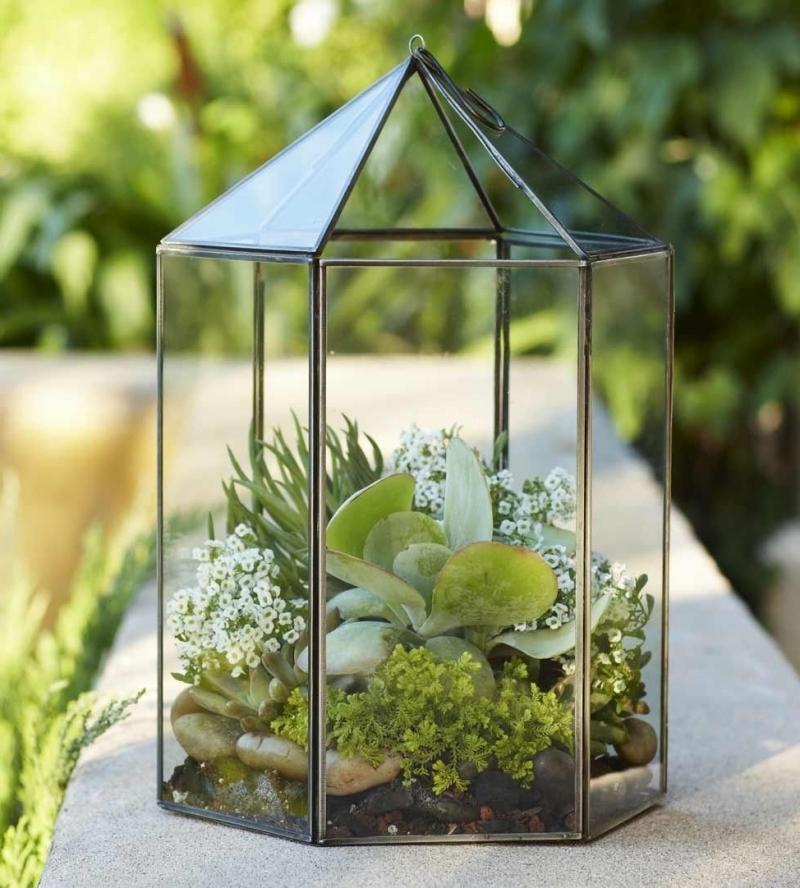 conseils cultivation plante dans pot en verre quel type sol