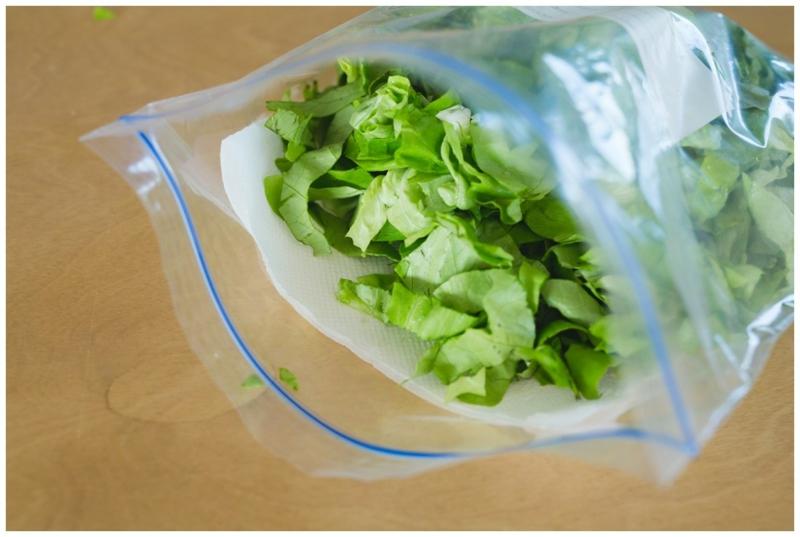 conserver salade laitue dans un récipient en plastique