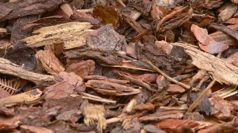 copeaux de bois jardin paillage d écorce de pin dans le jardin