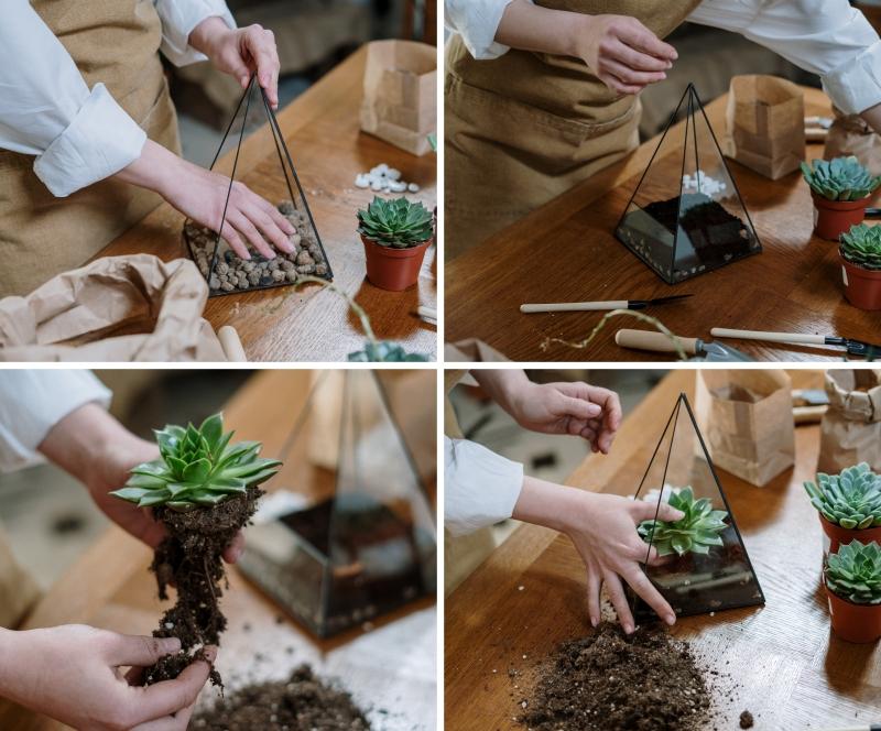 créer un mini jardin de plantes grasses sol succulente contenant verre