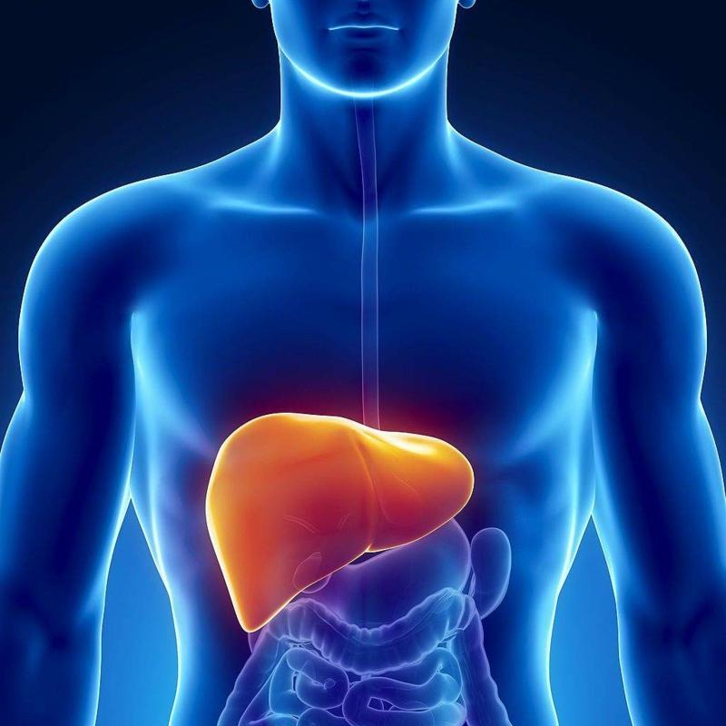 détoxifier le foie une image du corps humain et le foie