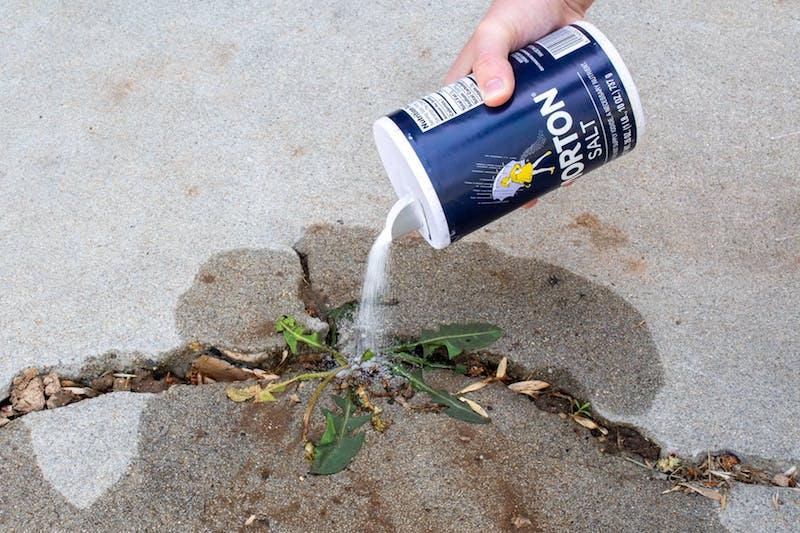 désherbant fait maison du sel pour désherber une allée de jardin