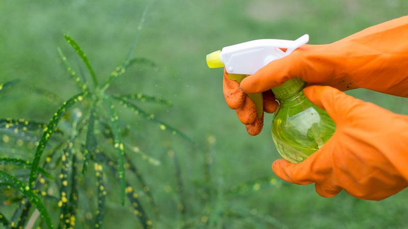 désherbant vinaigre blanc utilisé dans le jardin pour enlever les mauvaises herbes
