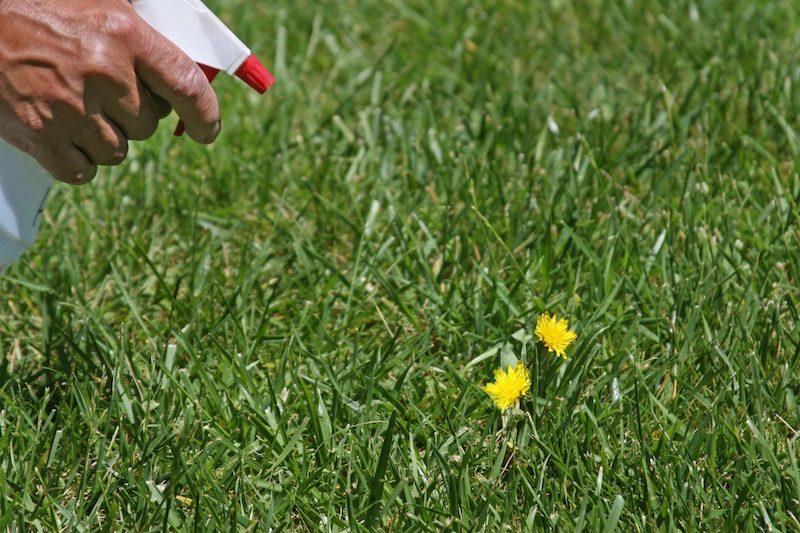 desherbant naturel efficace a fabriquer soi meme proteger jardin des mauvaises herbes