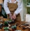 entretien conseils comment faire un terrarium maison plantes choix
