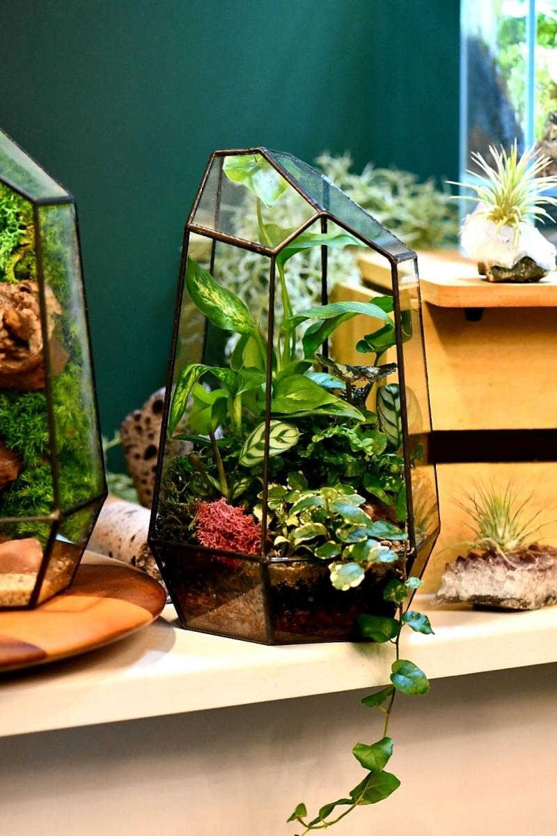 espèces plantes cultivation contenant verre terrarium entretien