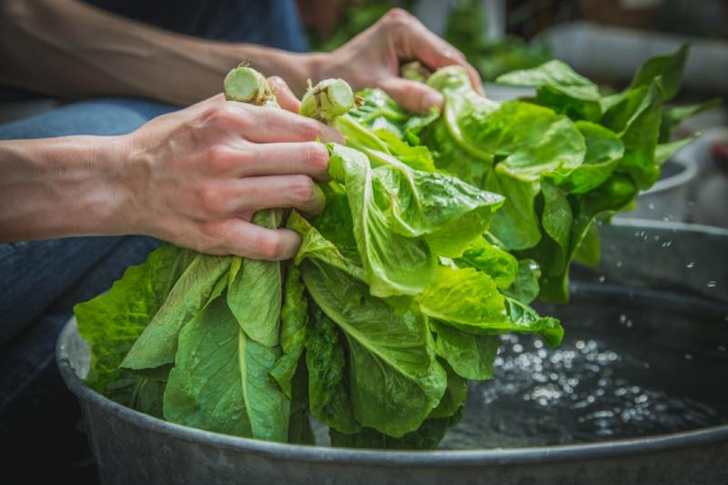 essorer salade sans essoreuse secouer les feuilles vertes pour faire l eau s écouler