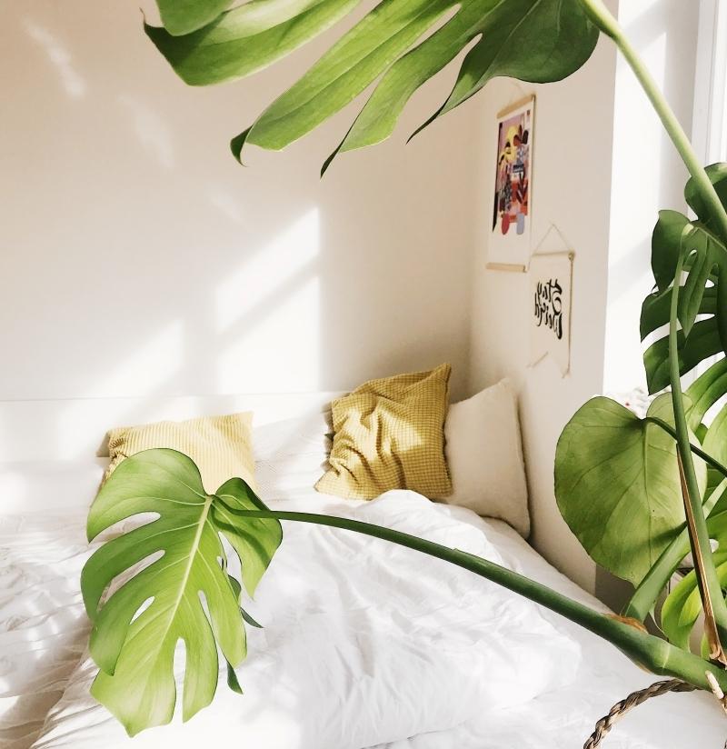 feuilles monstera lit douillet décoration petite chambre art mural